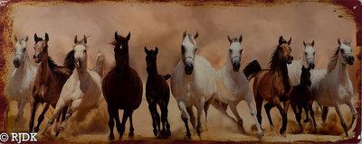 Paarden 20x50
